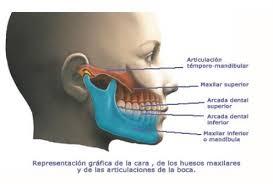 articulación temporomandibular ATM